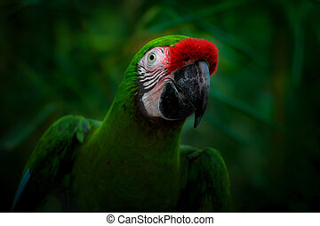 smiling parrot on a dark green background