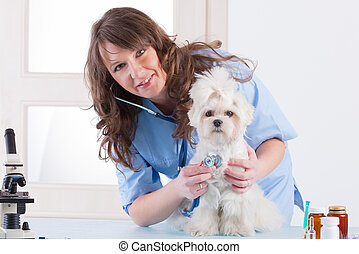 smiling woman veterinarian examining dog with stethoscope