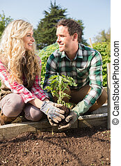 Smiling young couple planting a shrub