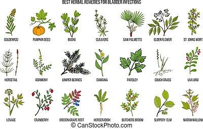 smittor, herbal, blåsa, bäst, botemedel