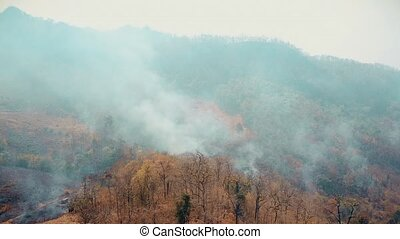 Smog of forest fires. Deforestation and Climate crisis. ...