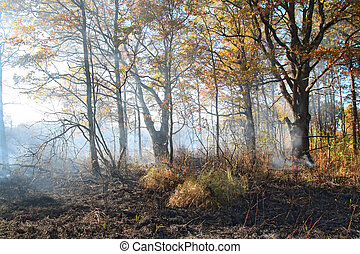 smoke after fire in oak wood