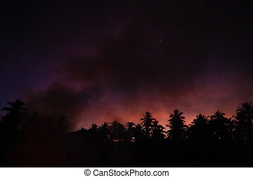 Smoke from a bonfire in a rainforest at sunset. Fires in the forest. Smoke on the background of palm trees at sunset