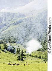 Smoke in Alps of Austria - Alps in Austria, with cows, wild...