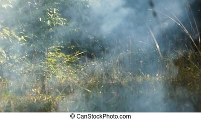 Smoke in the Forest - Light gray smoke emanates from the...