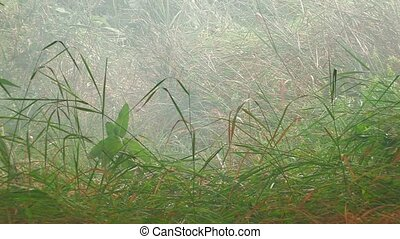 smoke on green grass after rain