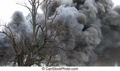 Smokey House Fire Behind the Oak - A blazing fire creates...