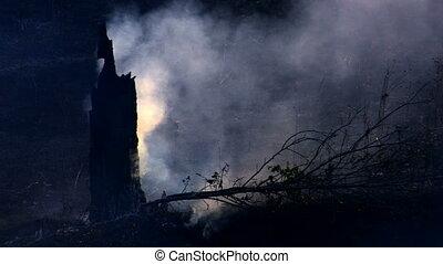Smoking burnt tree, closeup