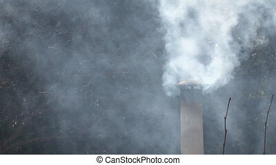 Smoking Flue and Trees - A stovepipe chimney exhausts wood...