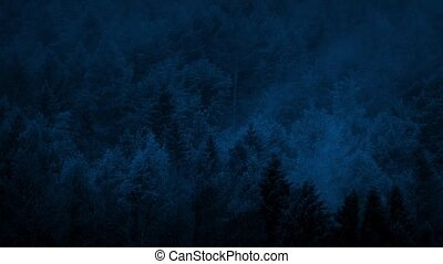 Smoky Forest Late At Night - Mist rises from the woods in...