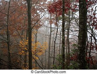 Smoky Mountain Fog