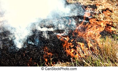 Smoldering ashes from the wildfire. Burning dry grass close...