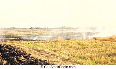 Smoldering smoke on the field of dry grass. White sky...