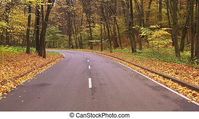 Flying over curved asphalt road in the autumn forest. Smooth first-person drone flight over curved forest path.
