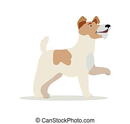 Smooth Fox Terrier Dog Breed Isolated on White. - Smooth Fox...