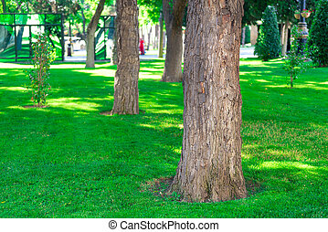 smooth green manicured lawn with large trees in the park