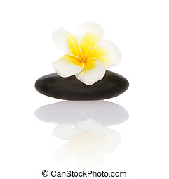 smooth pebble and frangipani flower