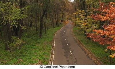 POV drone flight over the asphalt road through the autumn forest. Walk in the autumn forest above the asphalt forest highway.