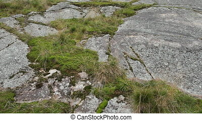 Smooth rock, moss and grass.