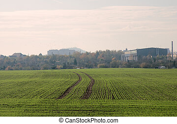 smooth rows of winter crops in October in Central Europe