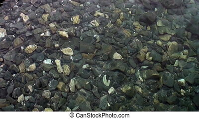 Smooth stones closeup under clean transparent water on coast of Lake Baikal.