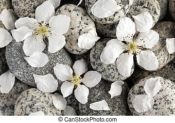Smooth stones with flower petals