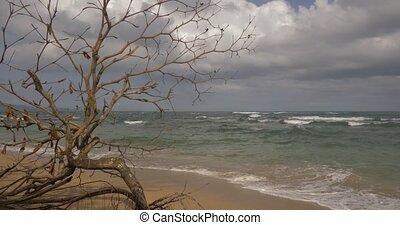 Smooth Walk Along A Beautiful Beach, Punta Uva, Costa Rica....