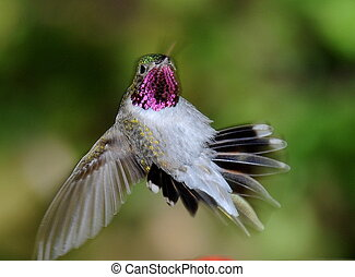 smrad, ptáček