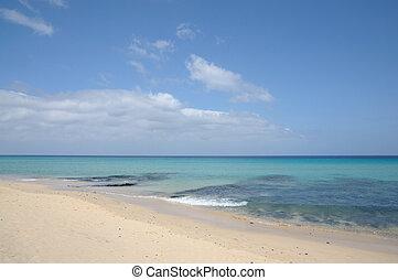smukke, ø, kanariefugl, fuerteventura, strand, tom
