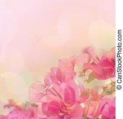 smukke, abstrakt, blomstrede, baggrund, hos, lyserød, flowers., grænse, konstruktion