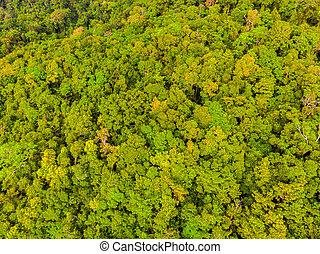smukke, aerial udsigt, i, træer, ind, den, skov