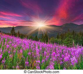 smukke, bjerge, efterår, lyserød blomstrer, landskab