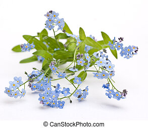smukke, blå blomstrer