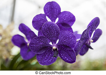 smukke, blomst, purpur, tre, branch, close-up., orkidé