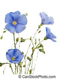 smukke, blomster, i, flax