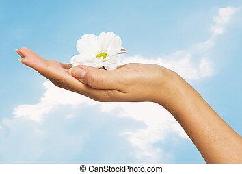 smukke, blomster, kvindelig ræk