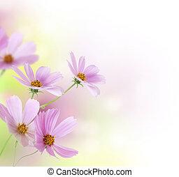 smukke, blomstrede, blomster, konstruktion, border.