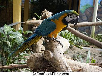 smukke, branch, papegøje, siddende