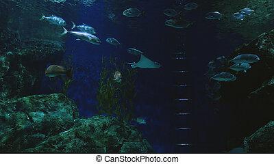 smukke, eksotiske, se, fish, ind, en, aquarium., underwater, scene
