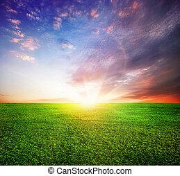 smukke, felt, grønne, solnedgang, eller, solopgang