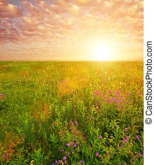 smukke, himmel, hen, blomst, felt