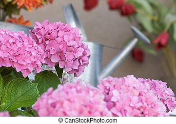 smukke, hydrangea, porch