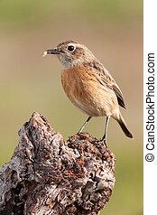 smukke, perched, vild, branch, fugl