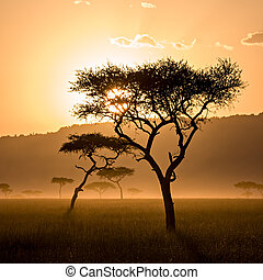 smukke, solnedgang, ind, massai, mara
