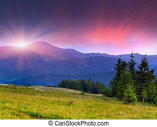smukke, sommer, landskab, ind, den, bjerge., solopgang