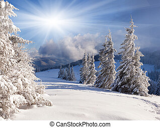 smukke, vinter landskab, hos, sne bedækkede, træer.