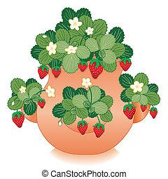smultron, lera, kruka, jordgubbe