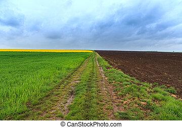 smutsroad, och, canola, fält