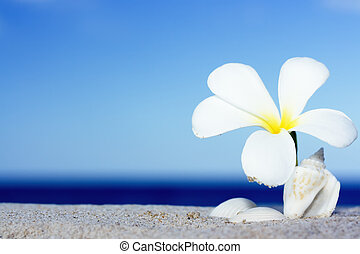 snäckskal, blomma, strand