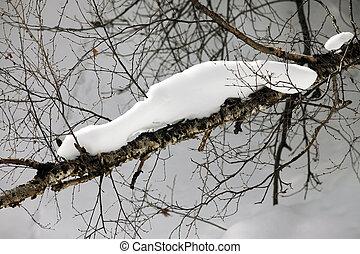 snö, filial, björk